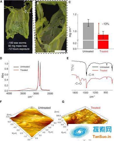 科学家发现会吃塑料袋的蠕虫