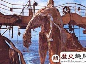 史前蛇颈龙:揭秘日本捕获海怪之谜